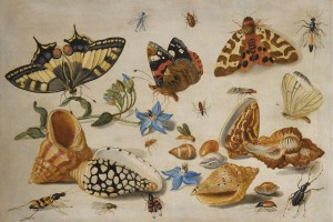 1280px-Jan_van_Kessel_de_Oude_-_Vlinders_en_andere_insects and shells