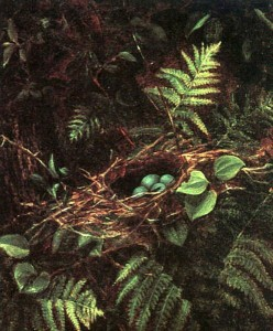 Bridges birds-nest-and-ferns