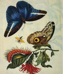 Merian insects snip