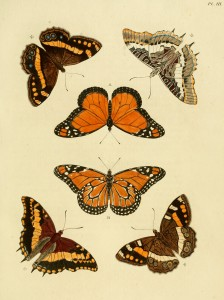 butterflies-of-asia-africa-and-america-1779_07-224x300