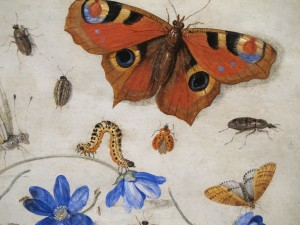 janvankessel-1659-oil-on-copper-detail-web insects butterfly